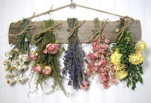 Dried Flower Business